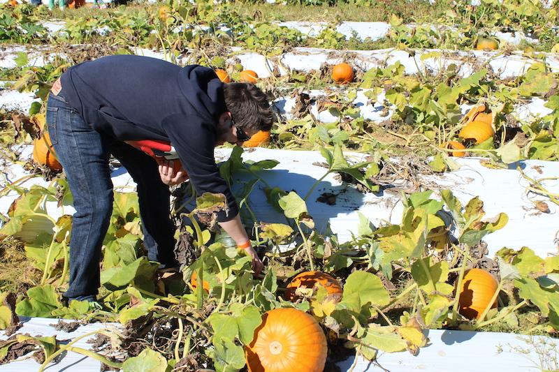 pumpkinpicking-8