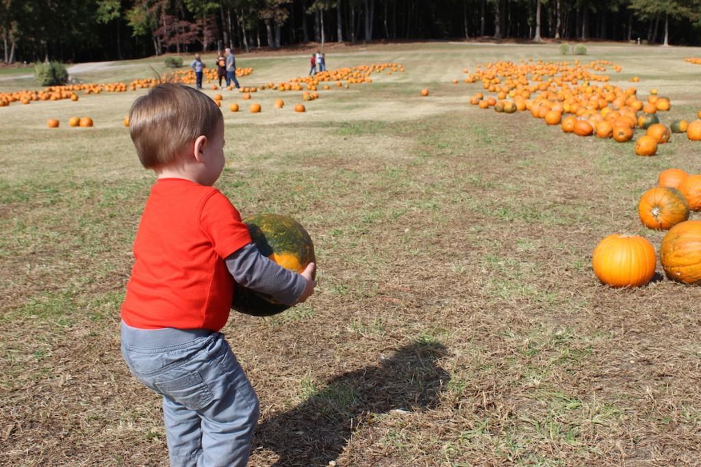 pumpkinpicking2015-13